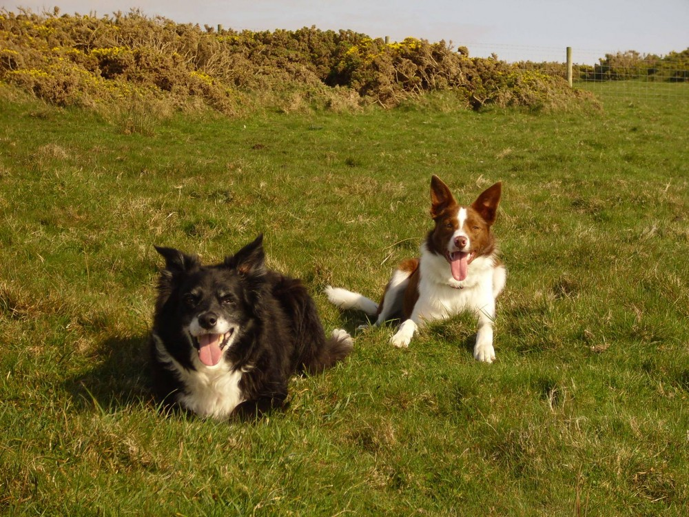 Cara and Tilly, wanting a ball, not a photograph!